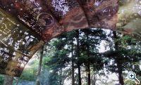 beisinghoff_canopy2
